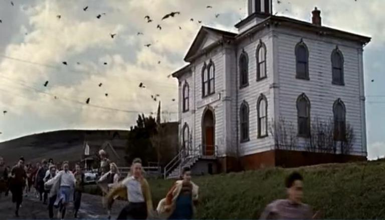 รีวิว หนัง The Birds นกแห่งอเมริกา